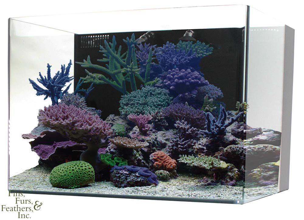 Jbj Nano Cube 45 Gallon Rl Rimless Biotope Aquarium Biotope Aquarium Aquarium Gallon