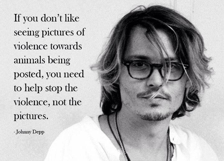 Quotes About Violence If You Don't Like Seeing Pictures Of Violence Towards Animals Being .