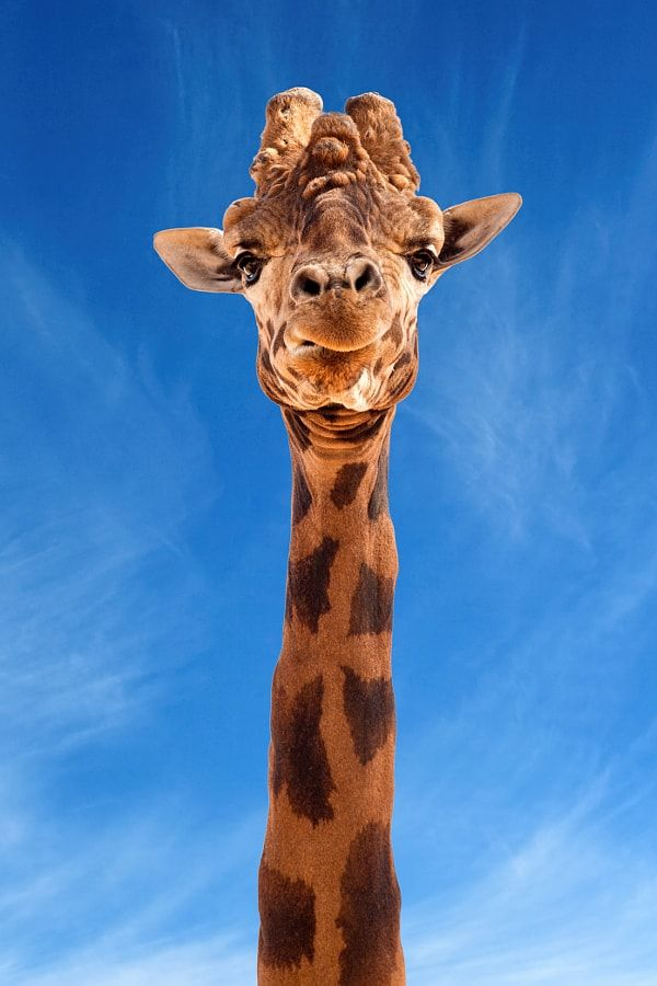 Here's looking at you! by Rachel Dulson / 500px