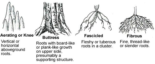 High School Botany Curriculum Root Structure Botany High School
