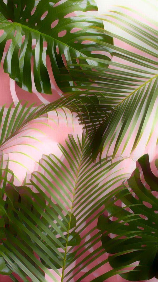 Plantsonpink Plants Tropical Tropicalplants Photography Wallpaper Framed Wallpaper Aesthetic Wallpapers