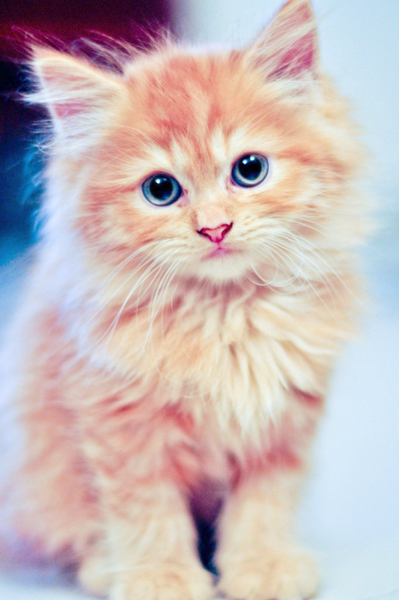Beautiful Cats Breeds Most Beautiful Cats On Earth Cute