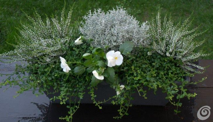fiori invernali | Giardino | Pinterest | Fioriere, Piante e ...