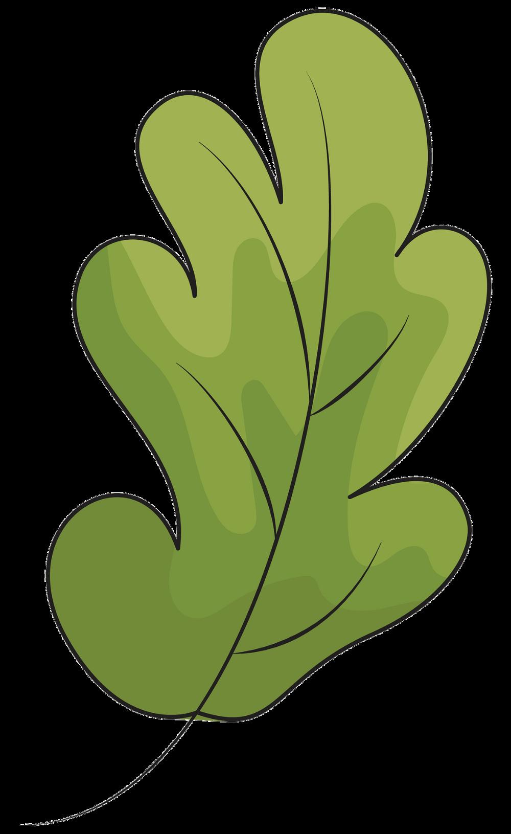 Oak Leaf Clipart Free Download Transparent Png Creazilla Clip Art Leaf Clipart Leaf Template