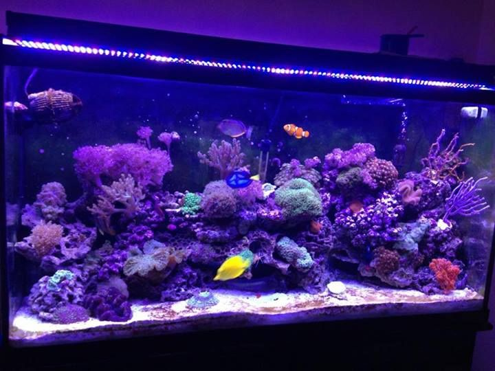 Check Out This Beautiful 60 Gallon Reef Tank Lit Solely By