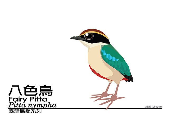 臺灣鳥類Q版系列 | Bird art, Birds, Art