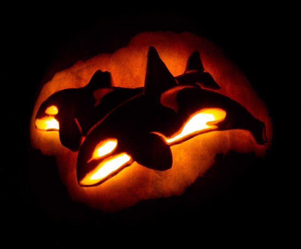 Killer Whale pumpkin carving! by Katie Dunbar | Pumpkin ...