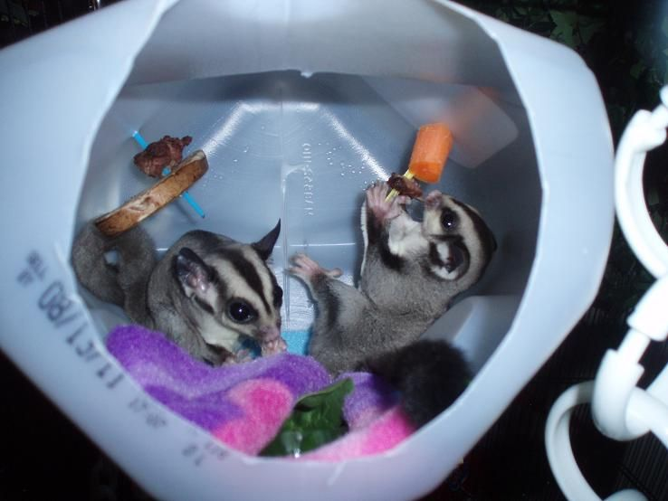 Toys For Sugar : Make your own sugar glider toys wow