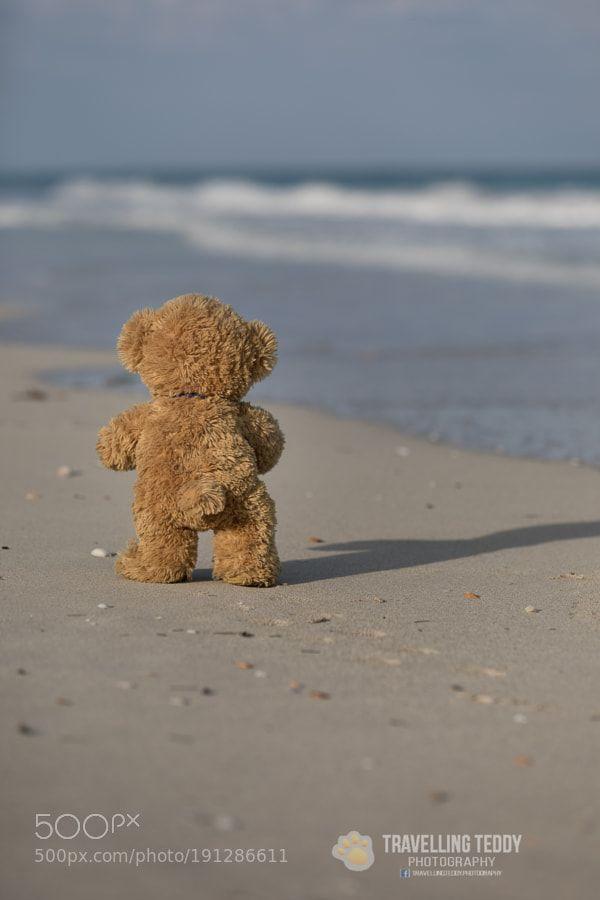 Popular on 500px : footprints in the sand by ckneidinger #teddybear
