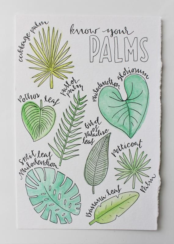 Palms Wall Art Palm Tree Types Of Palm Tropical Painting Floral Illustration Palm Tree Doodle Island Art Bird Of Paradise In 2020 Tree Doodle Floral Illustrations Bullet Journal Themes Green leaves and floral doodles in my bullet journal. pinterest