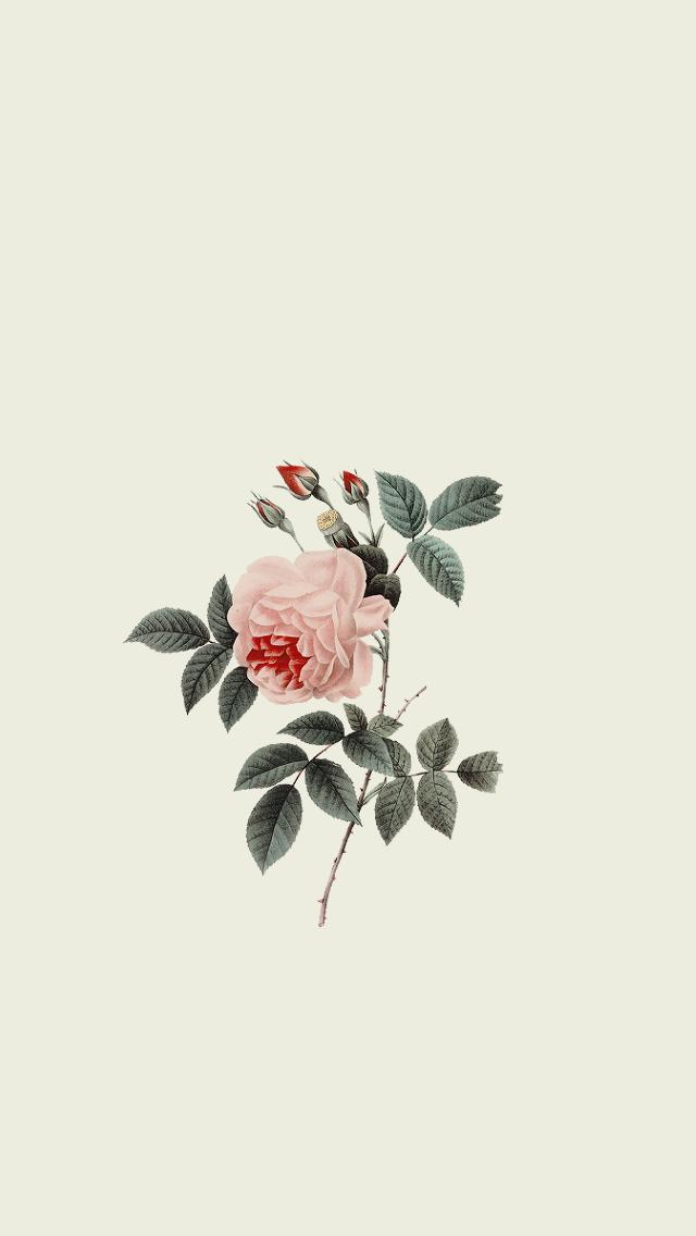 All Is Always Now Flash Wallpaper Minimalist Wallpaper Floral Wallpaper