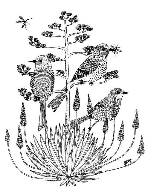 Cactus Wrens | Pinterest | Pájaro, Pajaritos y Dibujo