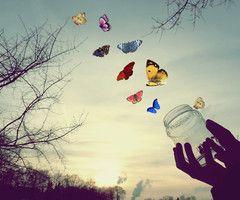 .Papillons libres