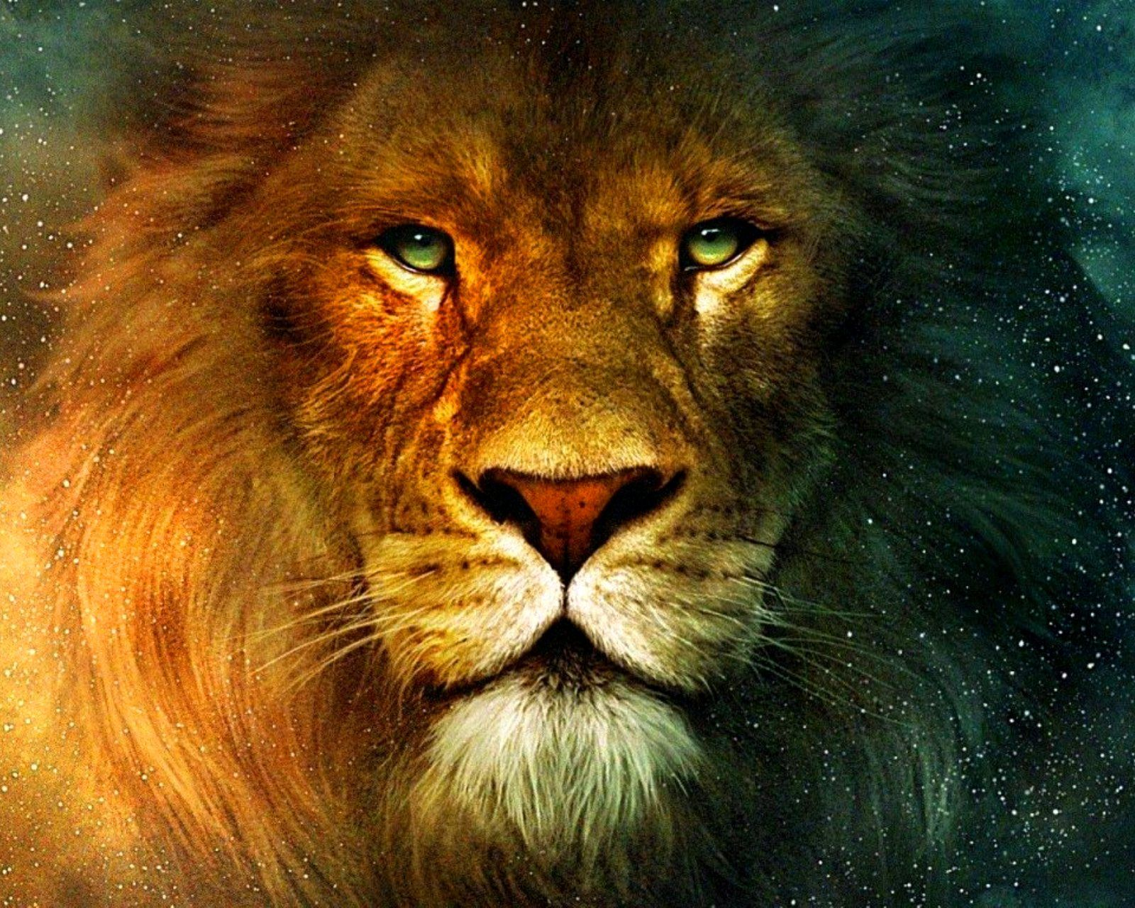 Pictures Of Aslan The Lion Aslan Lion 1600x1280 Free Screensaver