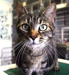 Adopt Kitty Love On Cat Room Kitty Pets