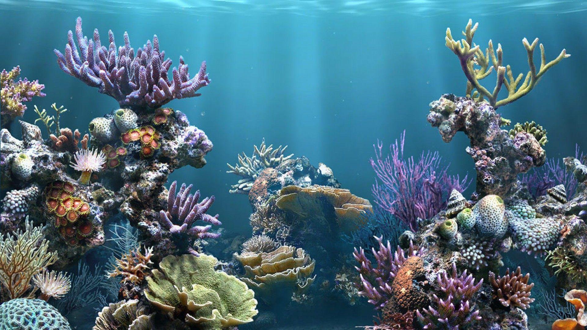 Fondo Marino Arrecifes De Coral Fondo De Pecera Fondo De Mar
