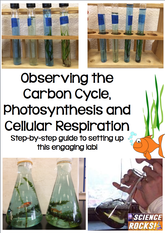 Step by step guide for setting up a carbon cycle lab