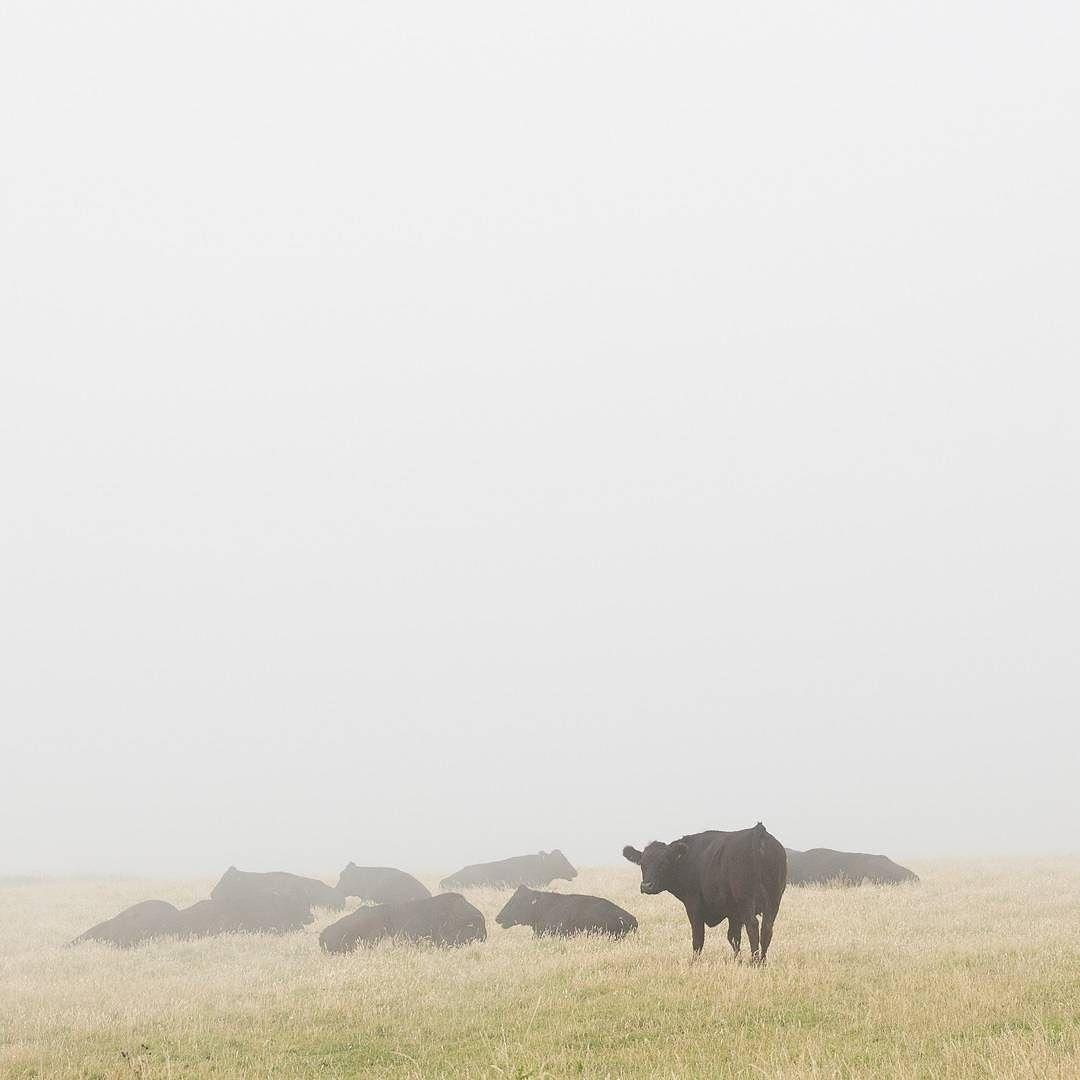 Herd Blagdon Cliff Devon. #ukcoastwalk Photo: Quintin Lake www.theperimeter.uk