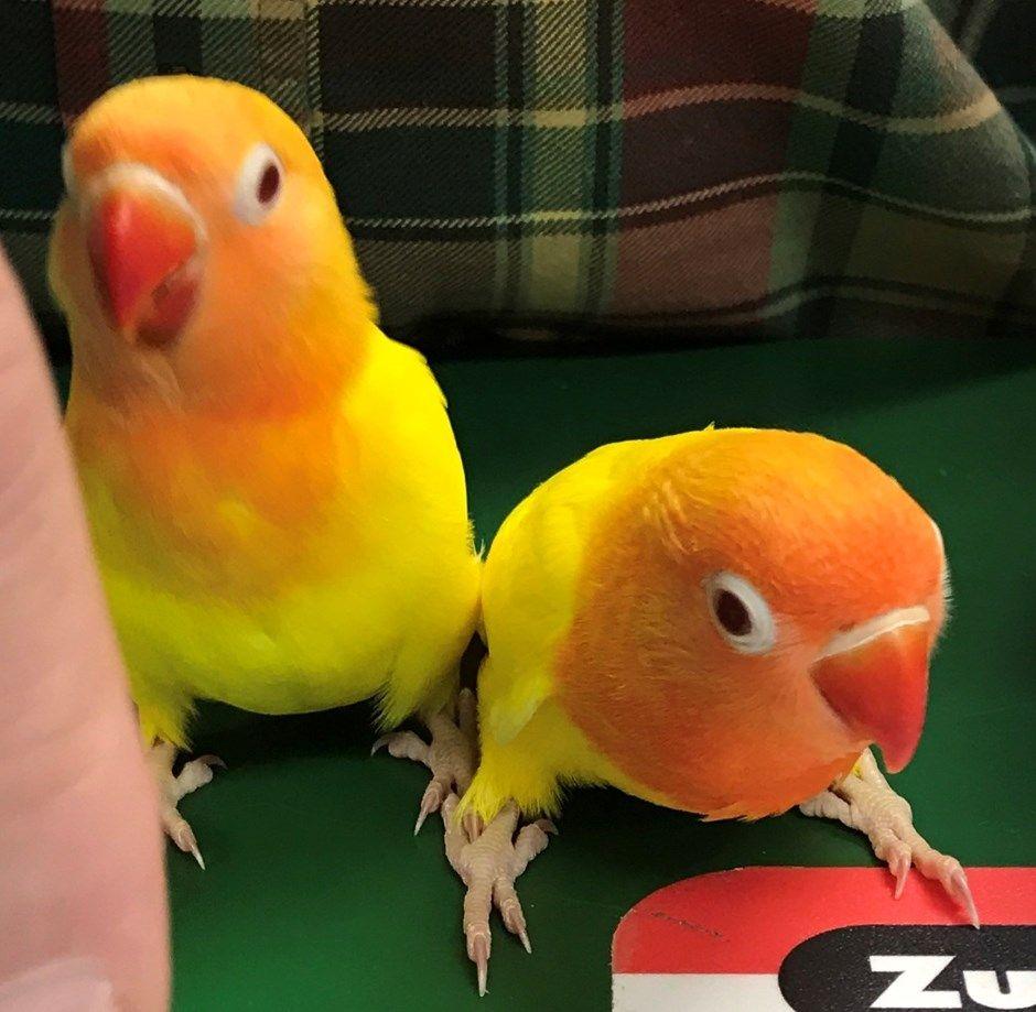 love birds food price