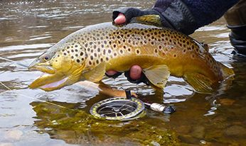 Brown trout photograph by Roger Bloom | Fly Fishing Rivers
