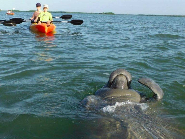 11 Best Things To Do In Fort Myers Florida Manatee Best Places