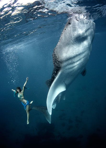 Part of a fashion series photoshoot of models swimming with whale sharks, photos by Shawn Heinrichs