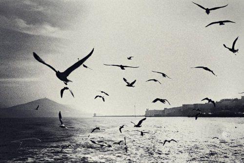 I wanna be a bird and fly freely