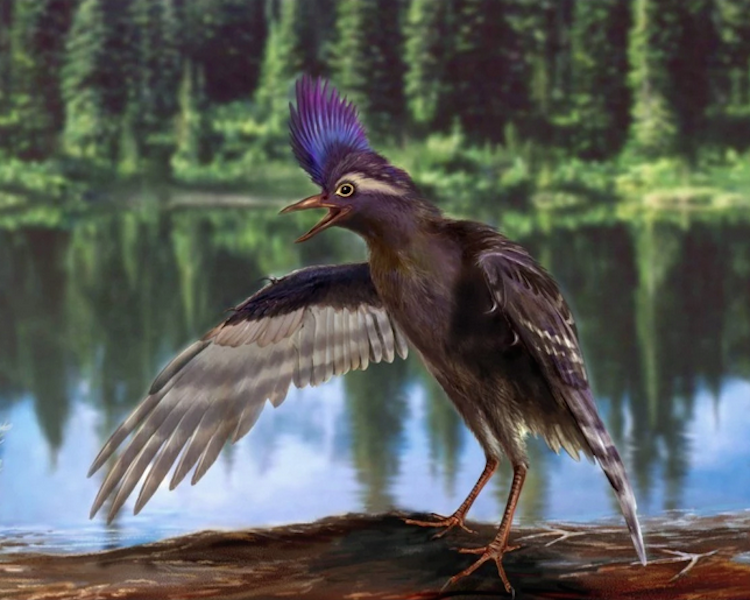 Fossils With Feathers Push Evolution Of Birds Earlier Into