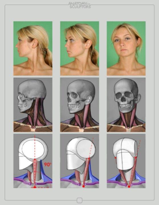 머리 목 근육 뼈 단순화 다각도