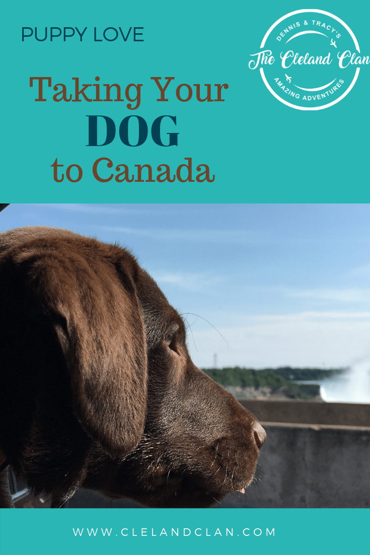 Taking Your Dog To Canada Dogs Dog Adventure Your Dog