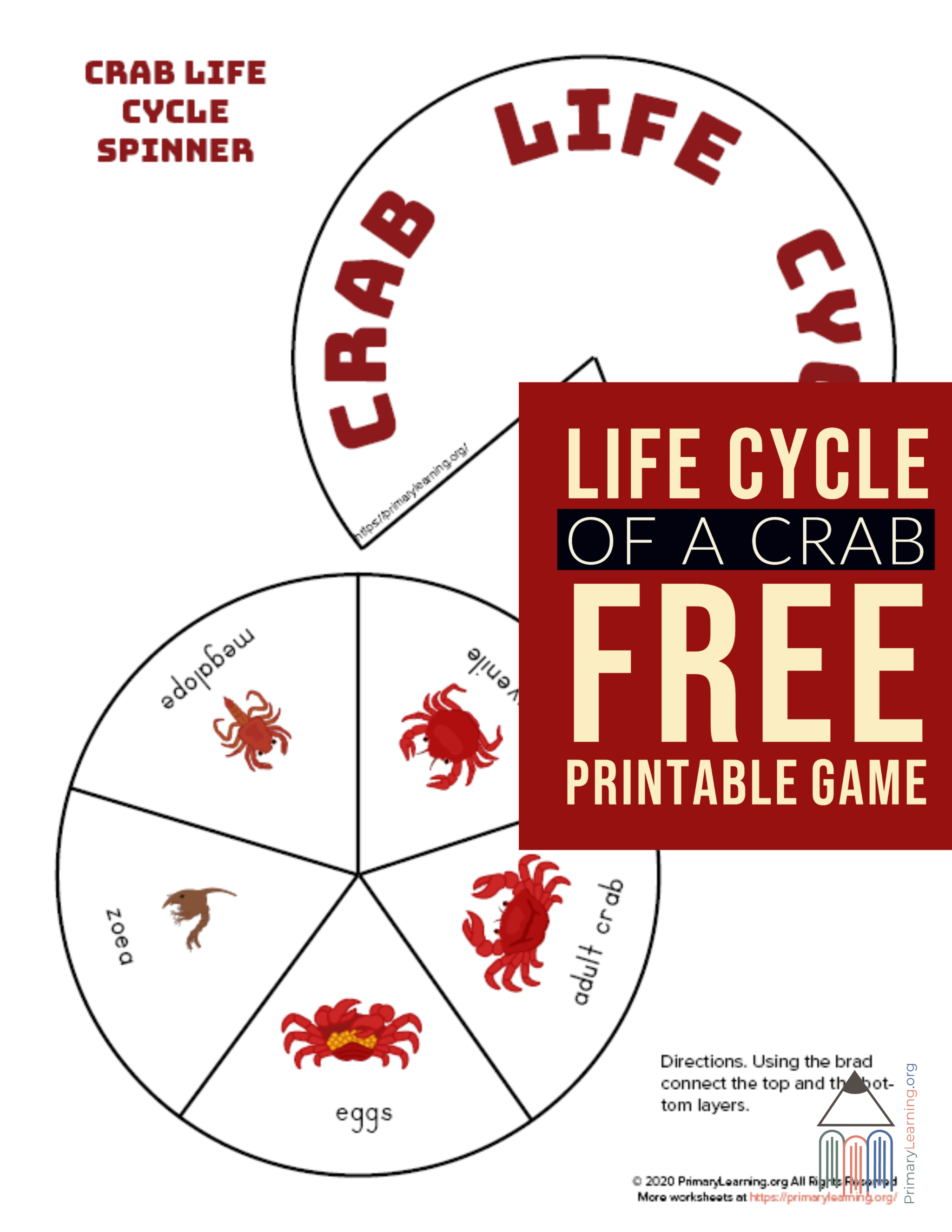 Crab Life Cycle Spinner