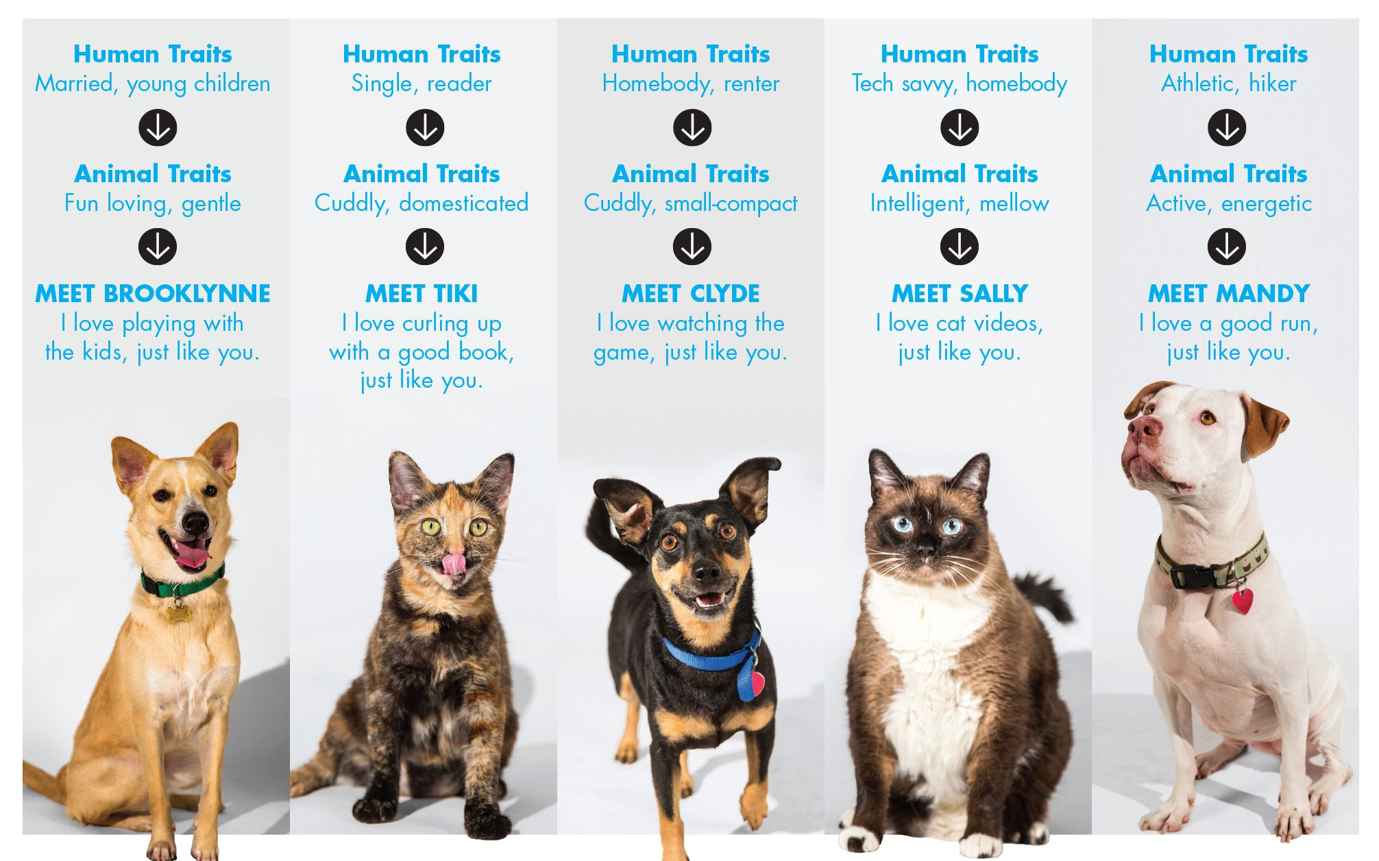 Programmatic Goes To The Dogs In Saatchi Pet Matching Effort