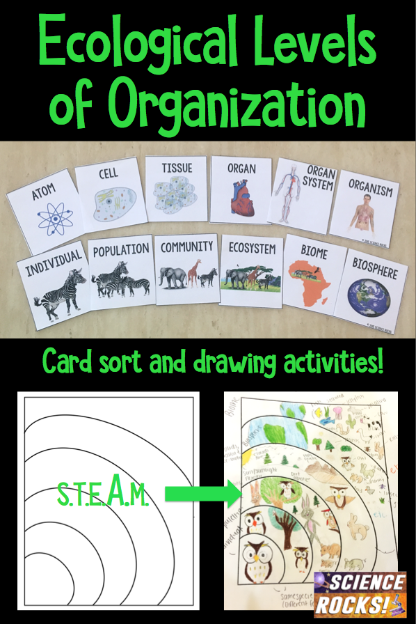 Levels Of Organization Card Sort Activity Levels Of Organization Biology Sorting Cards Middle School Science Resources