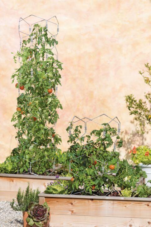 tomato trellis tall cage cages gardeners vertex supplies plants supply gardener lifetime climbing innovative