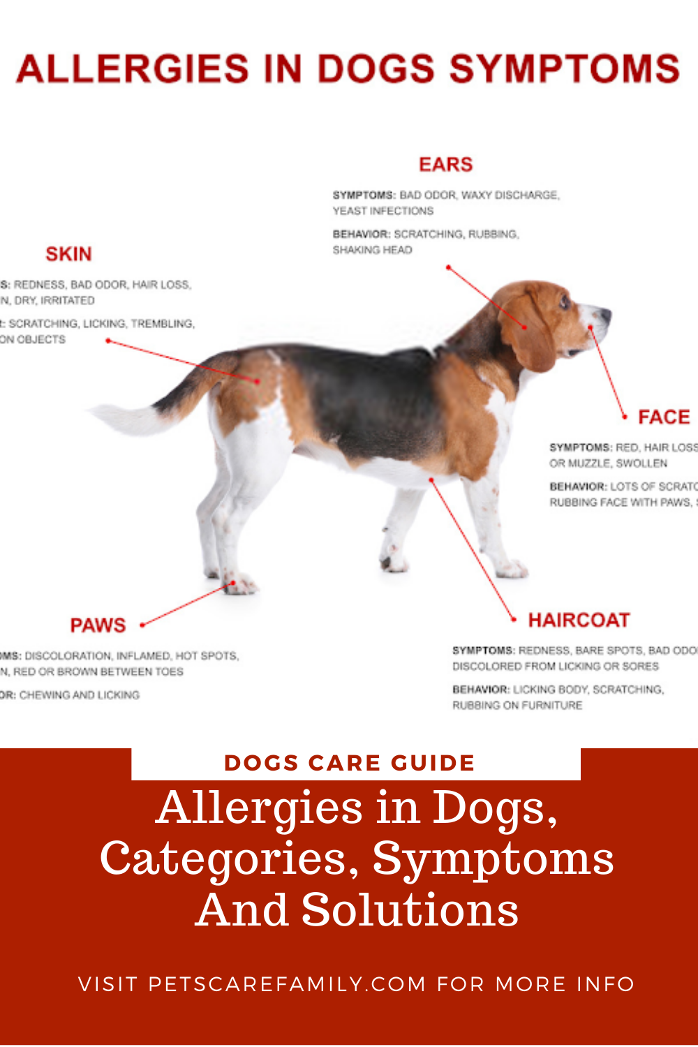 Allergies In Dogs Categories Symptoms And Solutions In 2020 Dog Allergies Dog Skin Allergies