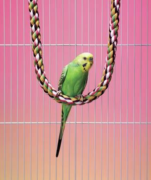 4 Low Maintenance Pets Low Maintenance Pets Animals For Kids Budgies