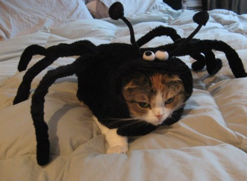 pet costumes for halloween - Google Search | Dog Halloween ...
