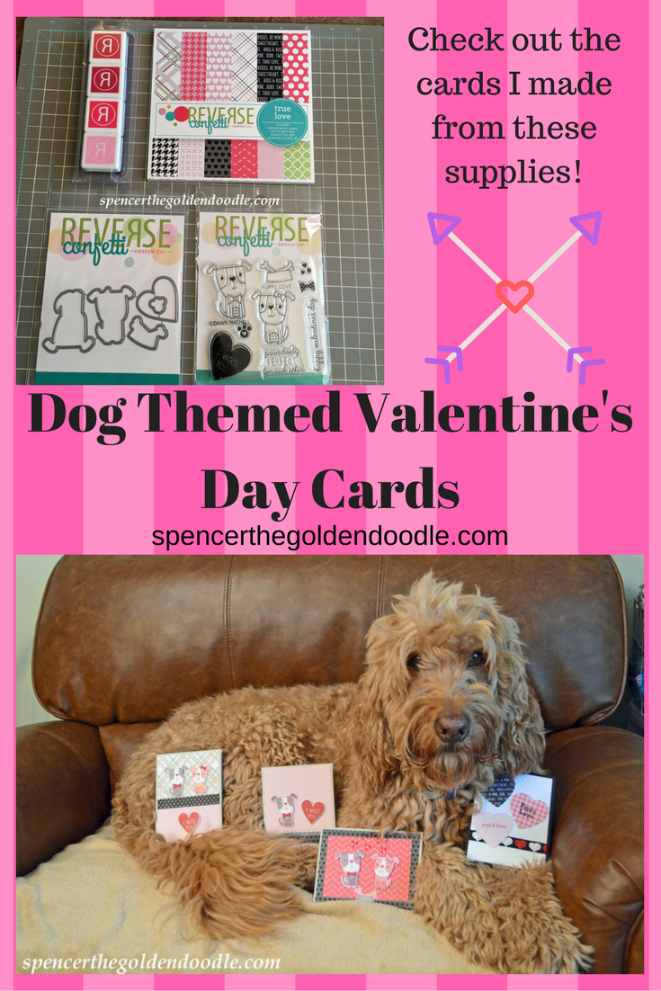 Spencer the Goldendoodle shares his cute homemade Valentineus day