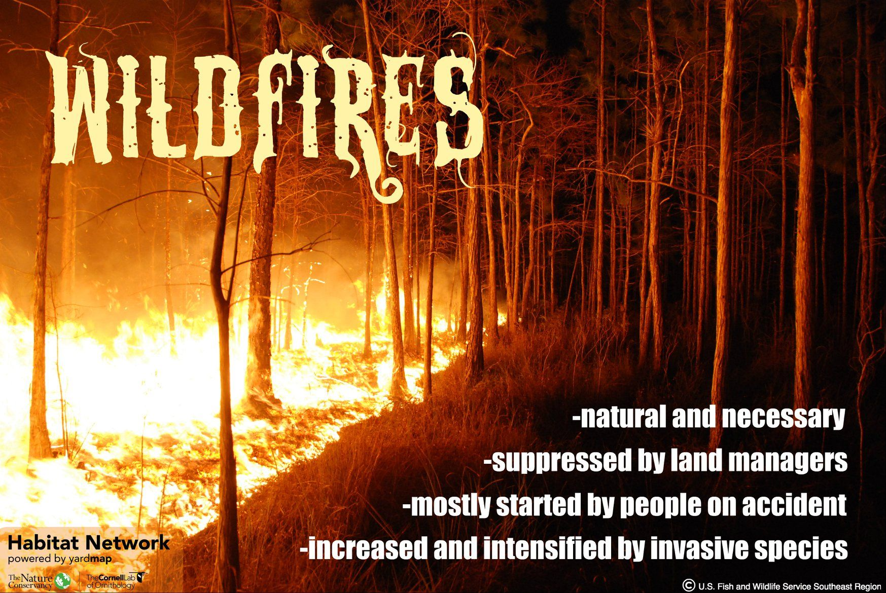 Wildfires are a common natural and necessary part of nature. Human management of landscapes and regular suppression of wildfires, combined with invasive species effects and a changing climate, have increased the intensity and scale of wildfires.