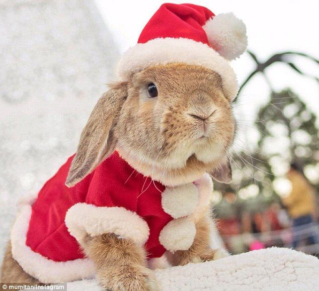 'I make all the costumes': 'The most stylish bunny in the world,' Mumitan has written on h...