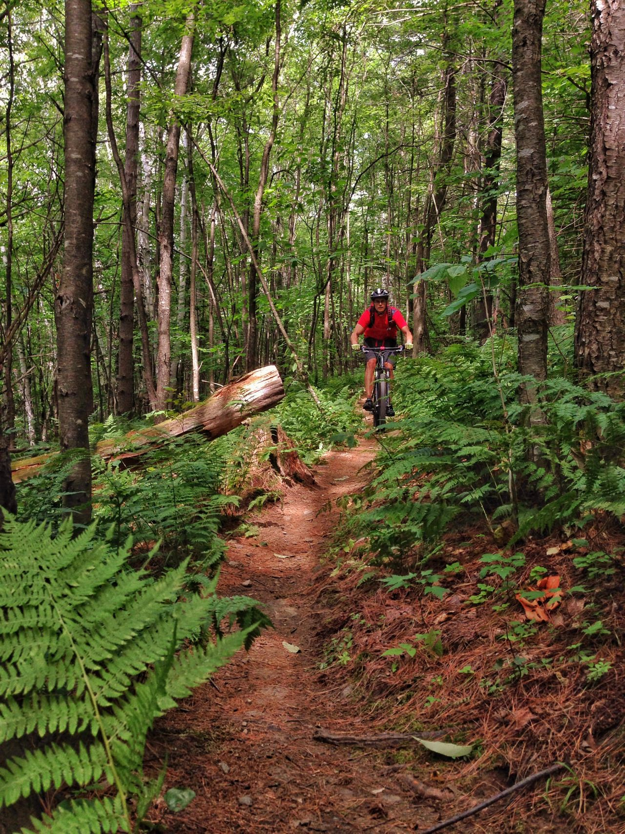A flowy section of trail at Mt. Ascutney, Vermont.