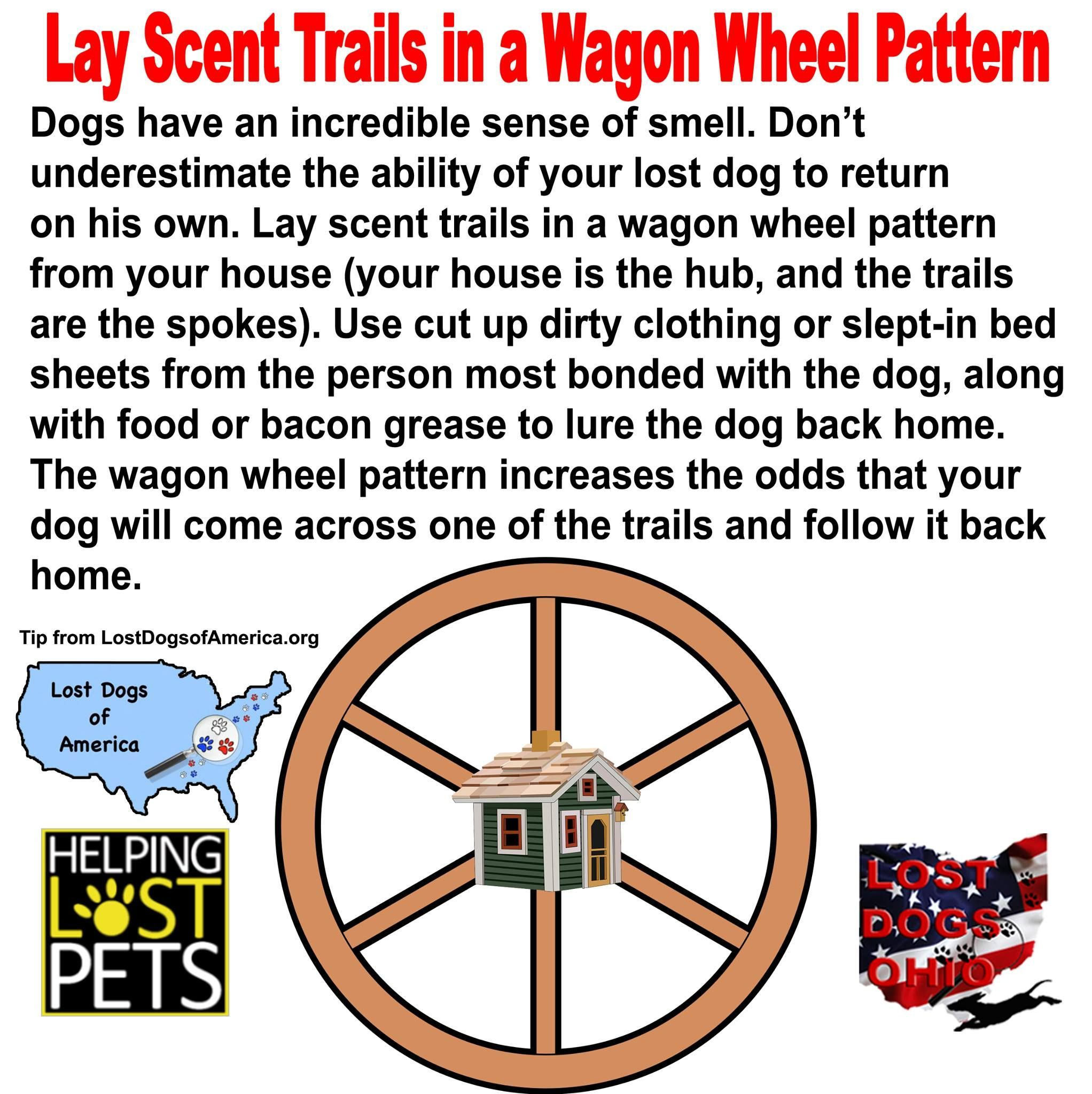 Your Dog Has A Great Sense Of Smell Help Him Find You By Laying Scent Trails That He Can Follow Losing A Dog Losing A Pet Dogs