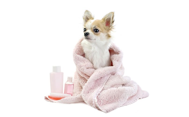 10 Doggy Spa Products On Amazon You Never Knew You Needed Fur Babies Dog Grooming Tips Dog Shampoo Puppy Grooming