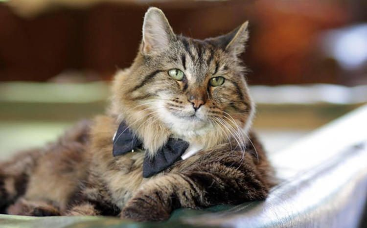 The World S Oldest Living Cat Age 26 Was Once Adopted From A Shelter With Images Old Cats Cat Ages