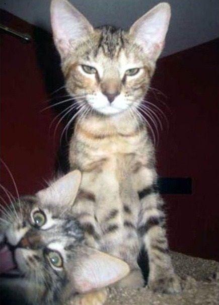 Even animals have that stupid friend