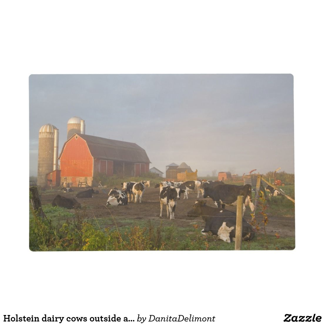 Holstein Dairy Cows Outside A Barn At Sunrise Placemat