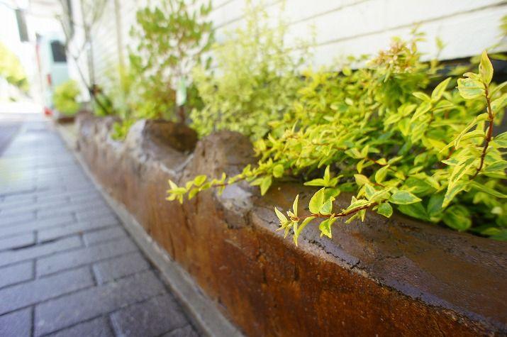 植栽後の花壇と植物