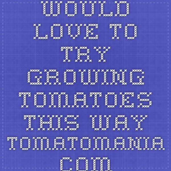 Would love to try growing tomatoes this way  tomatomania.com