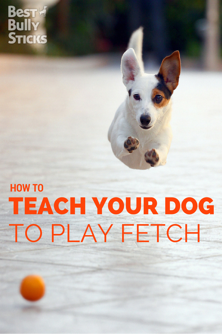 Pin On Spectacular Dog Training And Dog Care Must Haves