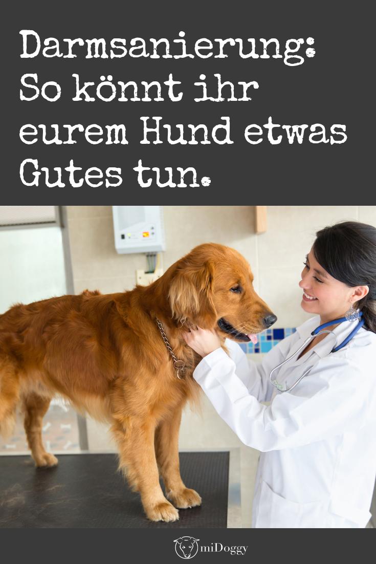 Darmsanierung Beim Hund Mit Bildern Hunde Durchfall Hund Hundegesundheit